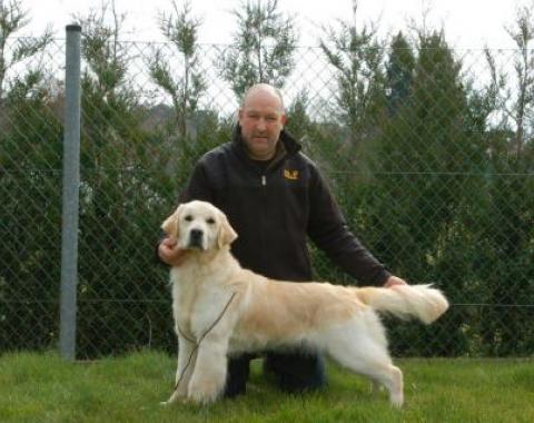 New girl Lola van 't Nielerdal golden retriever